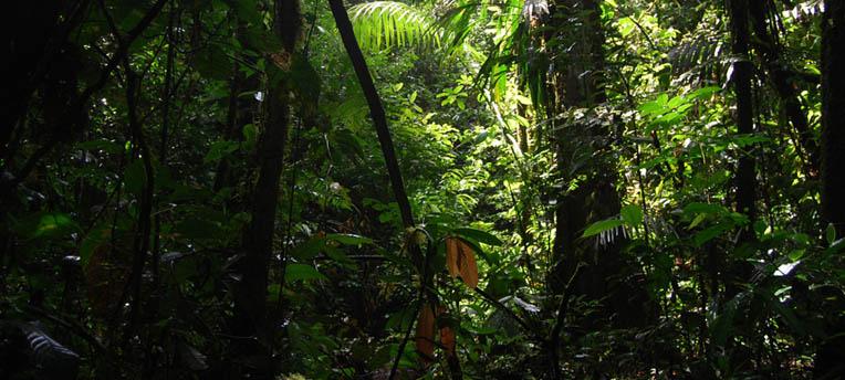 Reforestation : l'élan de solidarité des Equatoriens